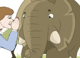 Female Animation Whispering to An Elephant