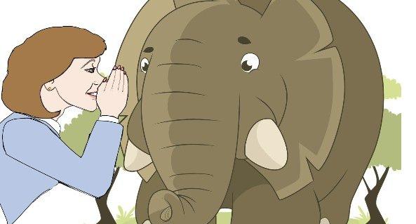 Whispering To The Elephant